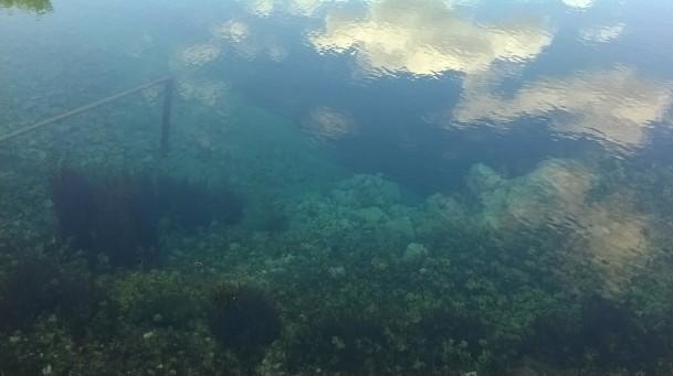 Cetina (water-spring)