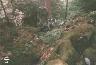 Slika (9)
